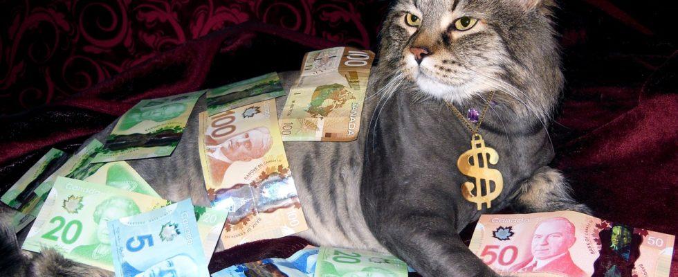 monatliche kosten katze