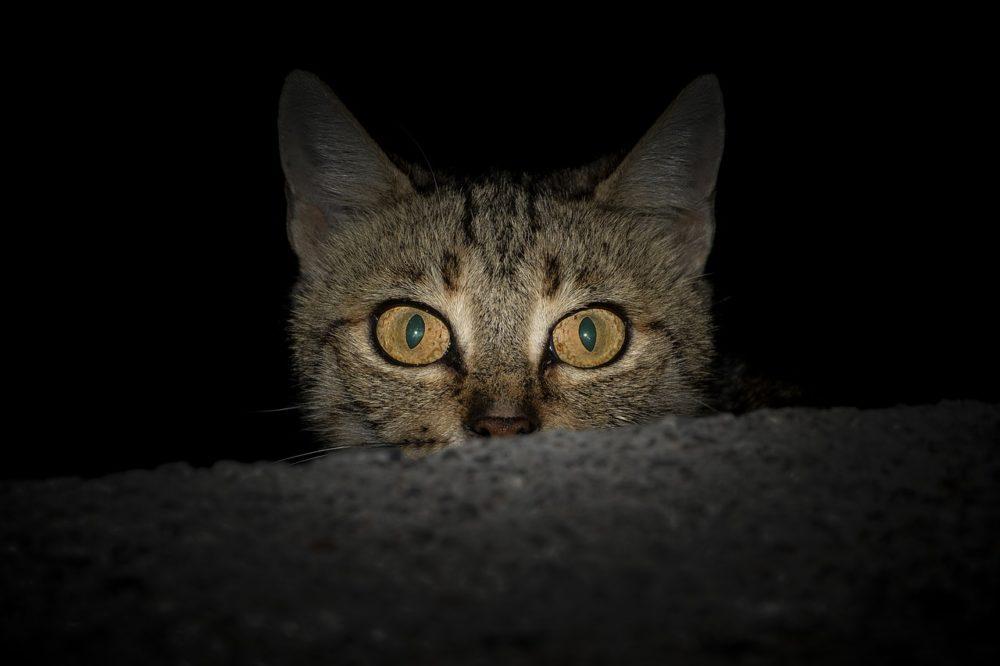 katzen sehen nachts