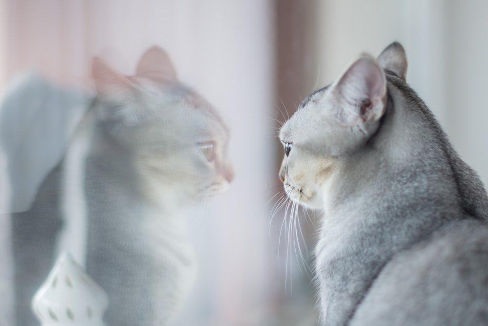 katze spiegel