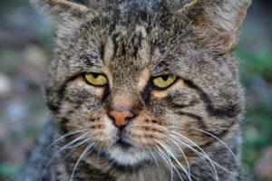 warum macht katze vor das katzenklo