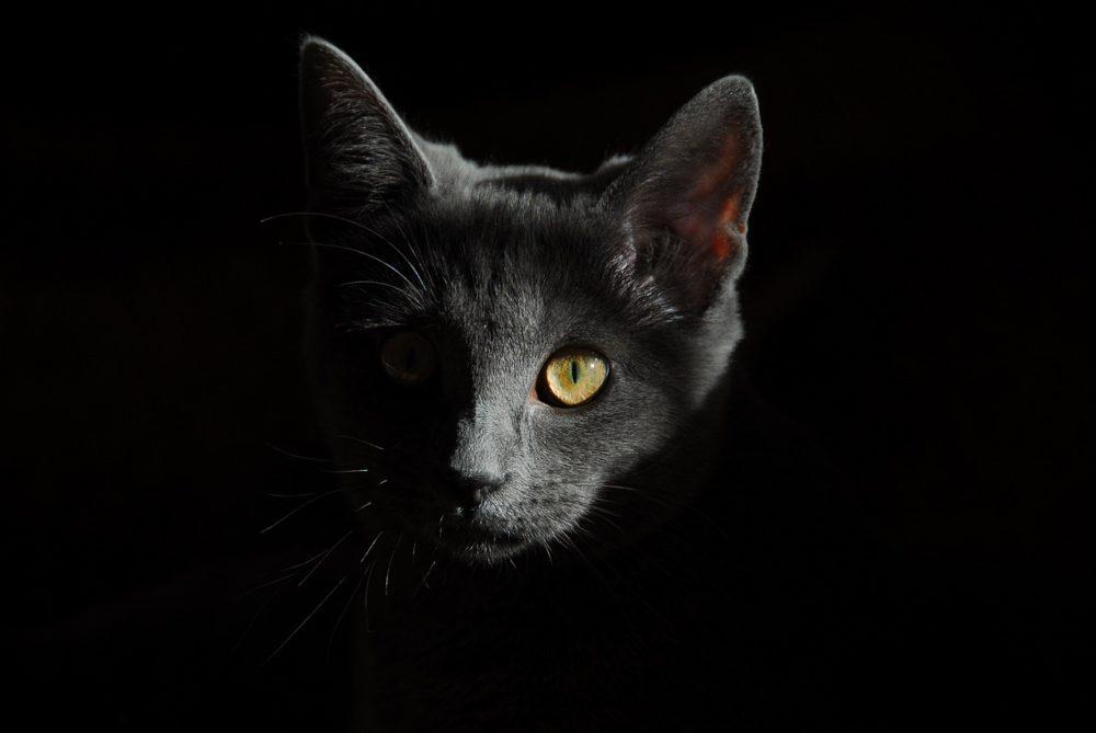 katze sieht nachts besser als menschen