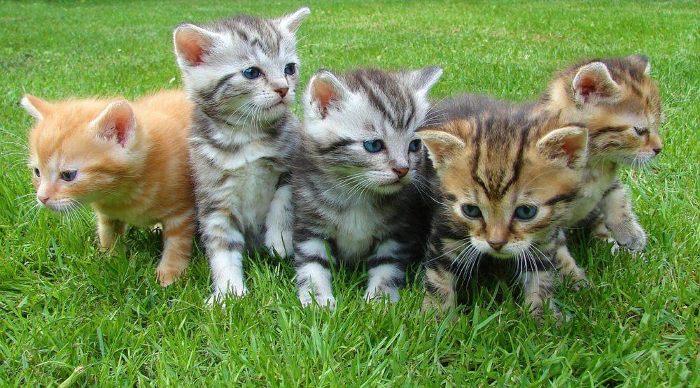 kitten nahrung