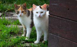 katzen vertragen sich nciht