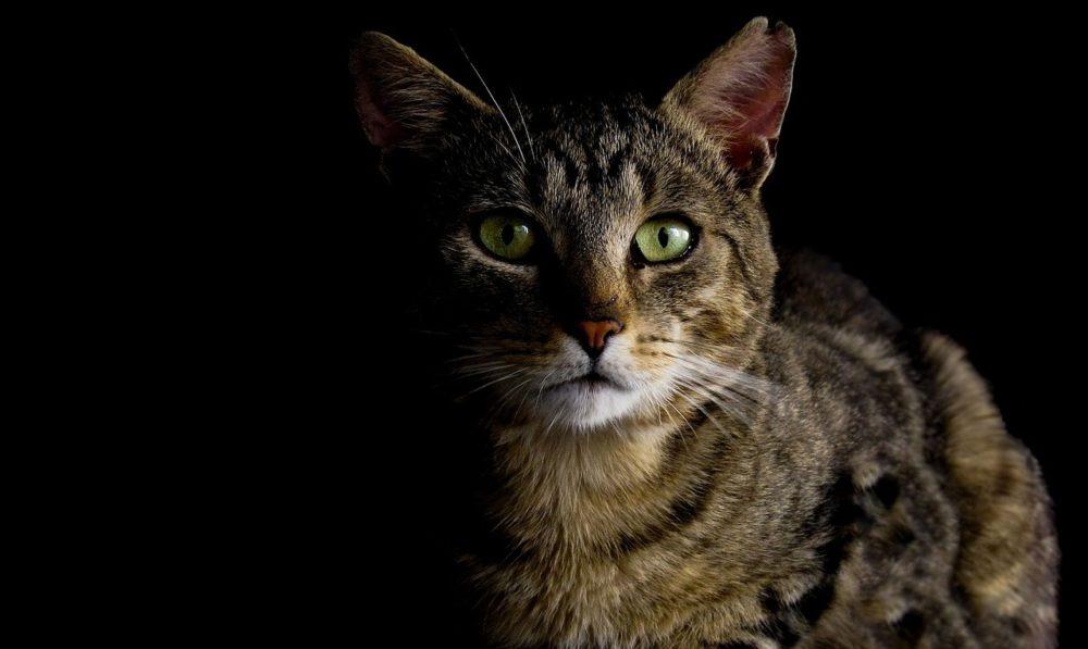 was denken katzen