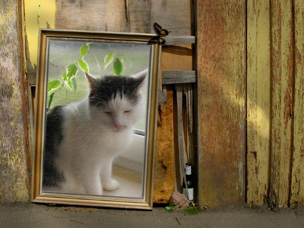 wie alt werden katzen