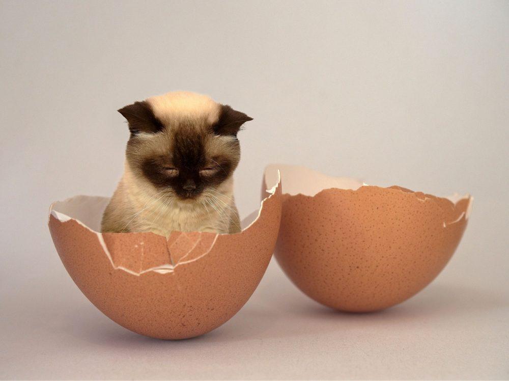 dürfen katzen ei essen