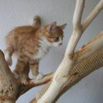 katzen klettern