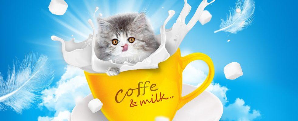 dürfen katzen milch trinken