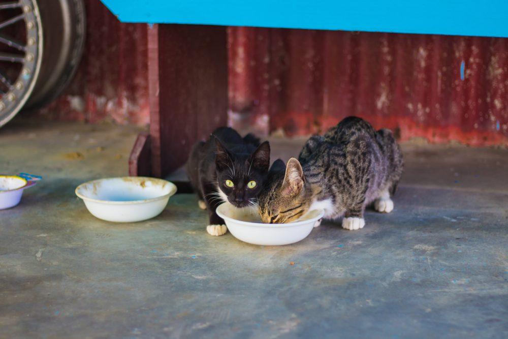 Was tun, wenn Katzen nicht fressen?