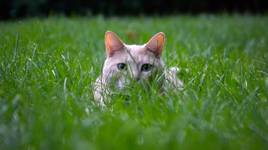 diese gerüche halten katzen fern!