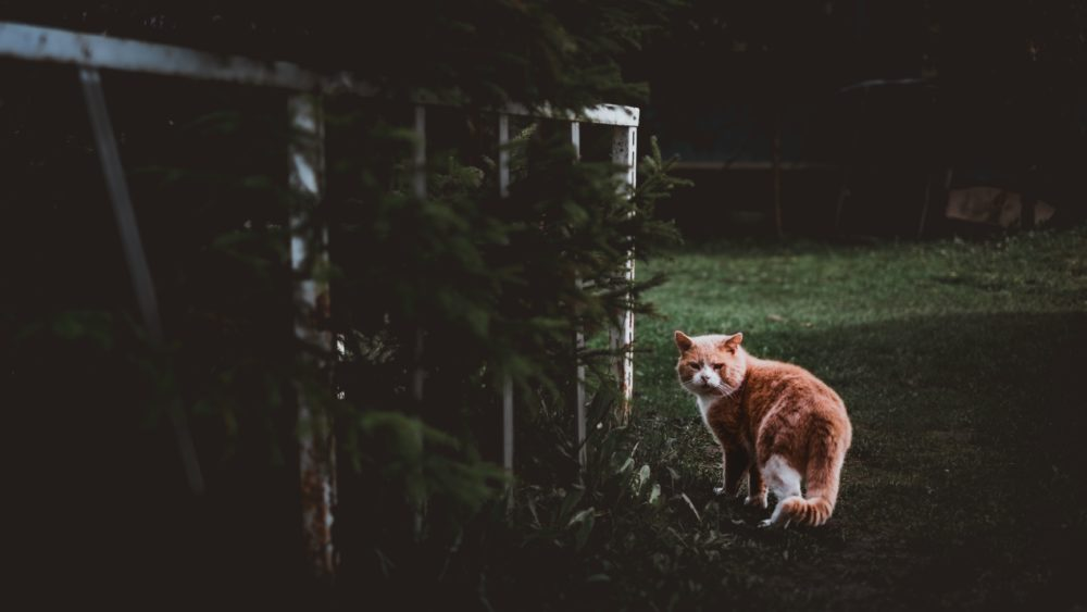 welche gerüche halten katzen fern?