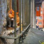 strassenkatze istanbul