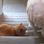 katzen und hundevideos