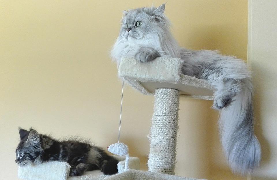 kratzbaum für grosse katzen