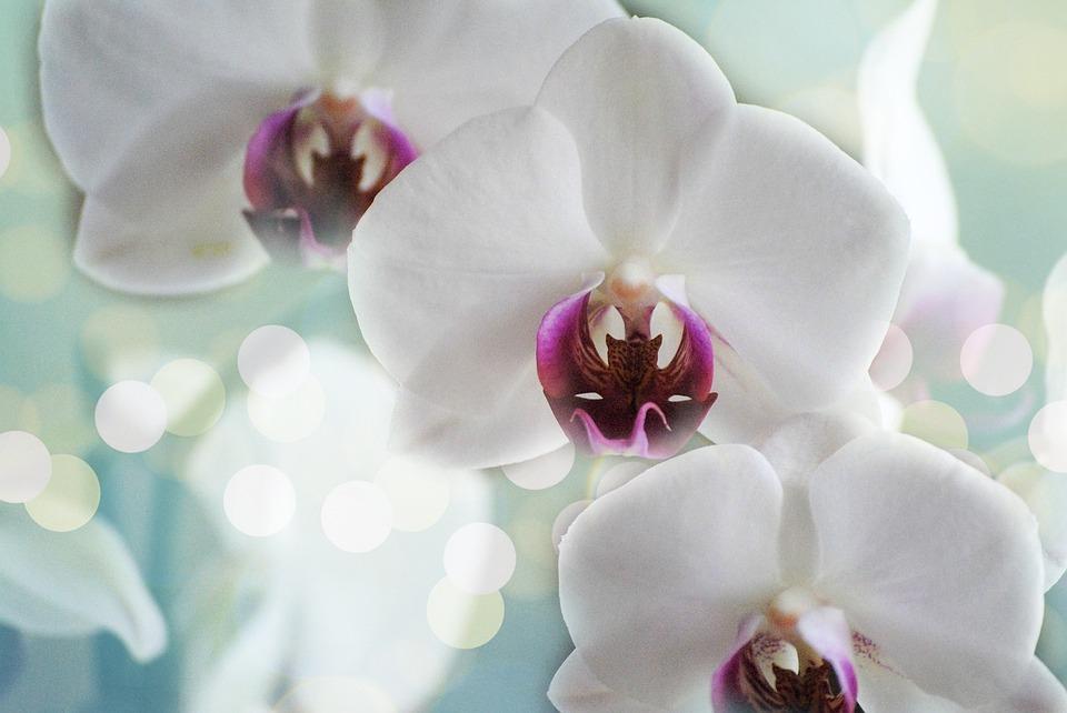 sind orchideen giftig für katzen