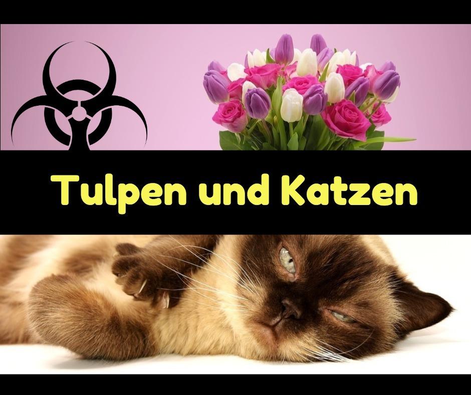 sind tulpen giftig für katzen