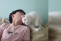 süsses katzenvideo