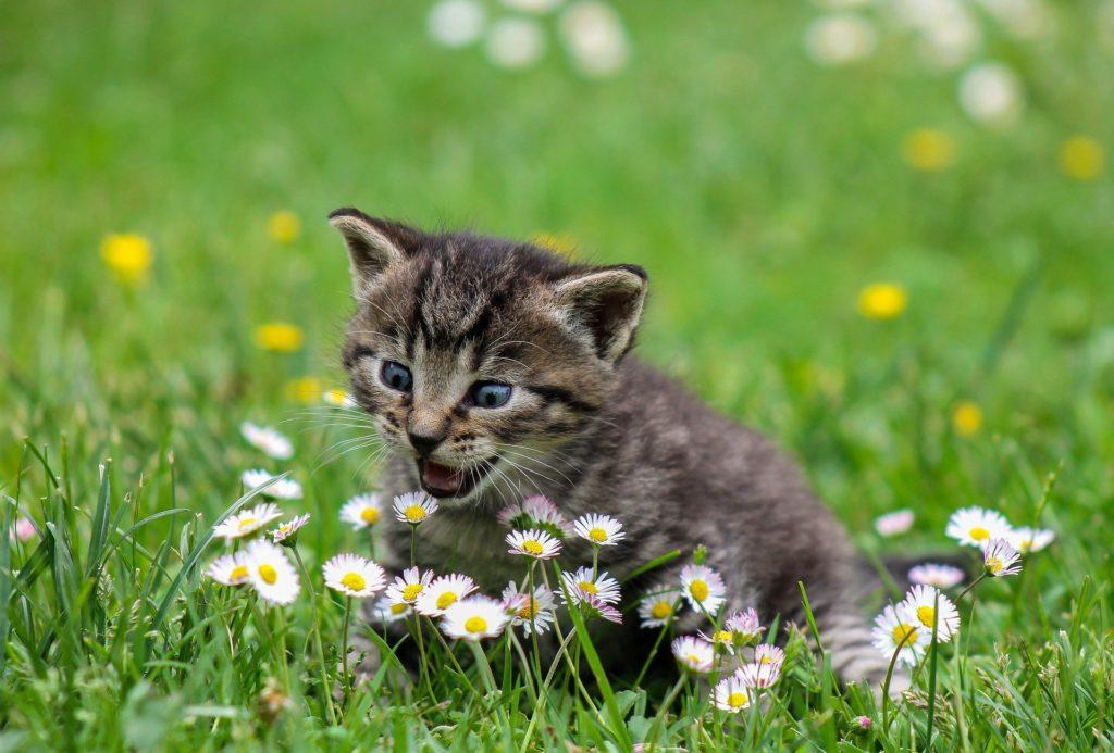 Katzenschlaukel