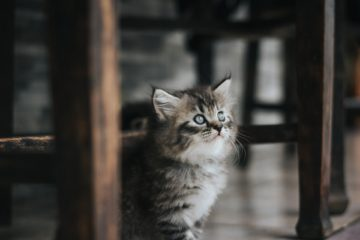 Katzen Kratzschutz