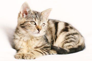 Katzengras Samen Bestenliste