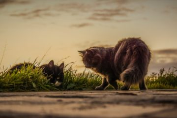 Katzenhaarentferner