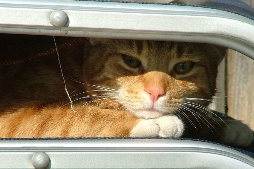 Kuhlmatte Katzen Die Besten Kuhlmatten Finden Katze Ratgeber De