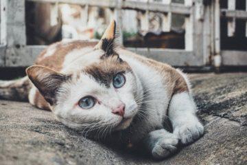 Katzennapf