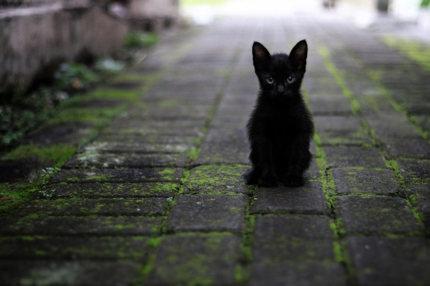 Katzengitter Bestenliste