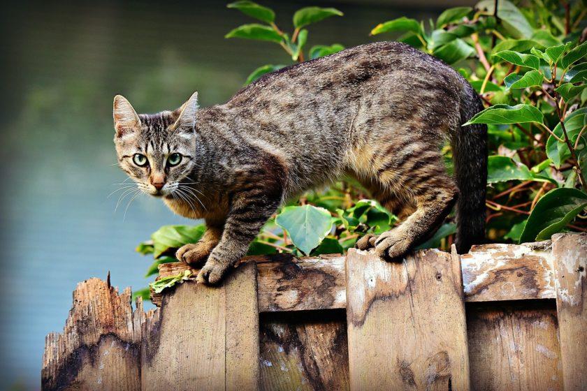 Katzen Gps