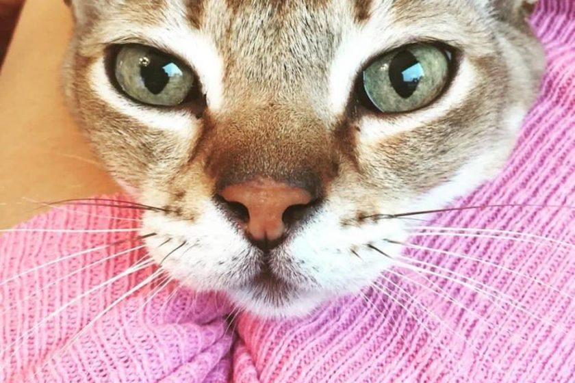 katzenpension finden